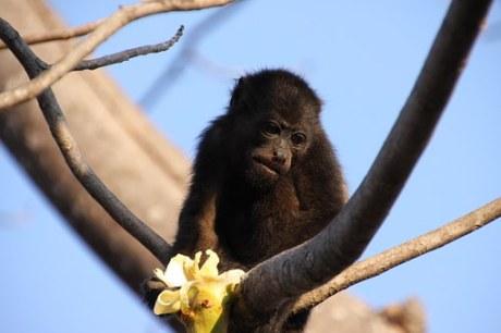 monkey-624797__340