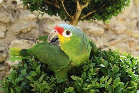 parrot-807303__340