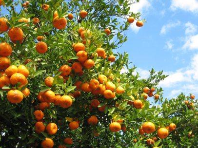 zone-9-orange.jpg
